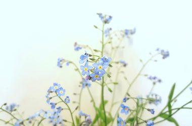 alergia esencialne oleje doterra jar senna nadcha