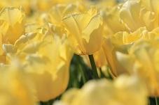 5 tipov na perfektnú jarnú očistu: Povieme vám, čo je hit tejto jari