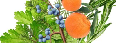 detoxikácia očista doterra zendocrine